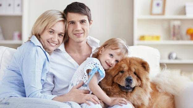 Wills & Trusts dog-young-family Direct Wills Warminster